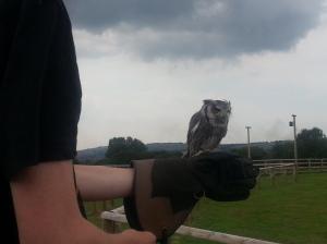 Tig the tiny owl