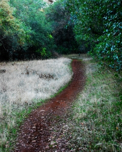 Do you focus on the path or the surroundings?