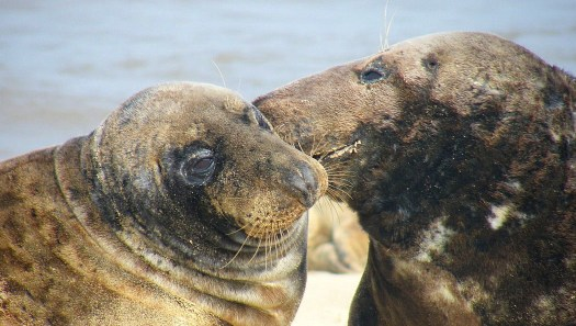 seals whispering
