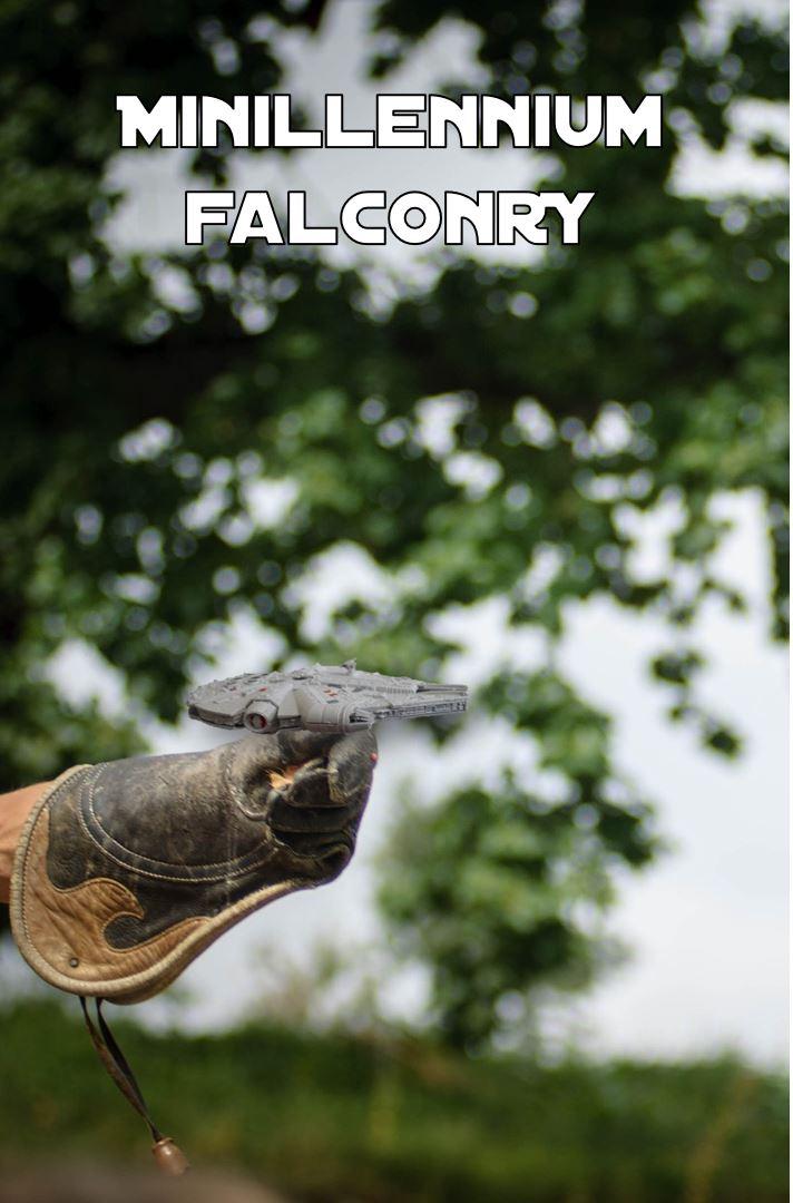 mf-falconry