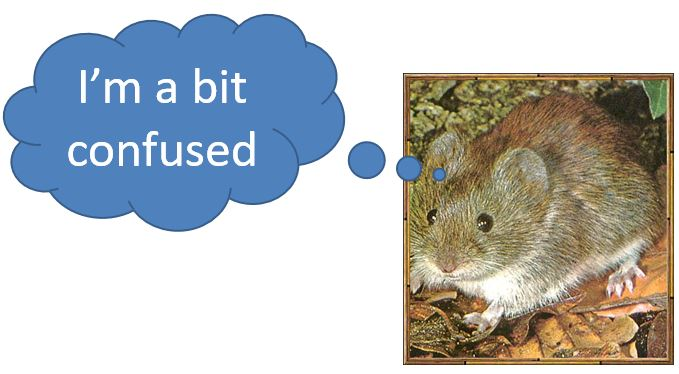 confused-vole