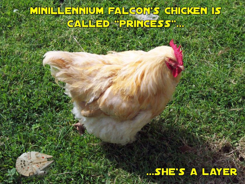 mf-chicken